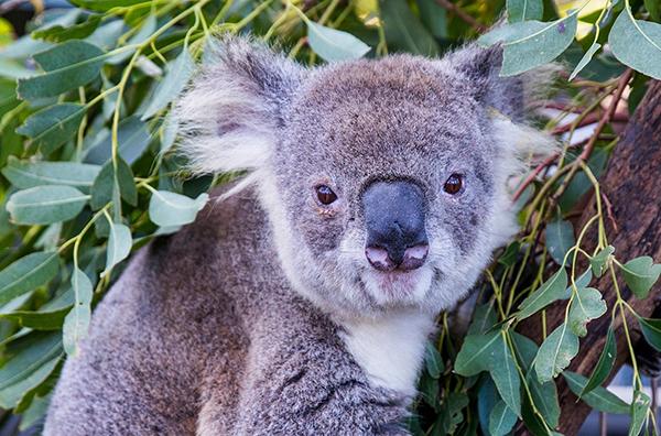 Nationaal Park Koala's