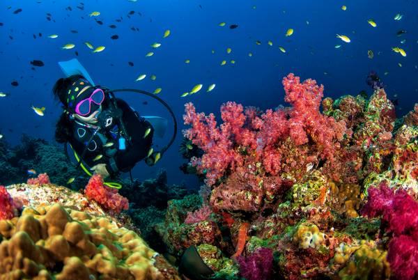 Thaise onderwaterwereld