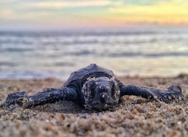 Schildpaddendag