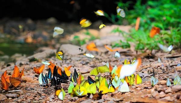 Natuurpark Kaeng Krachan